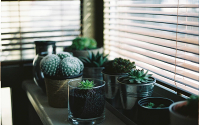 How Indoor Plants Can Brighten Up Your Rental