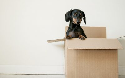 Move-Out Inspection: What Landlords & Tenants Need to Know