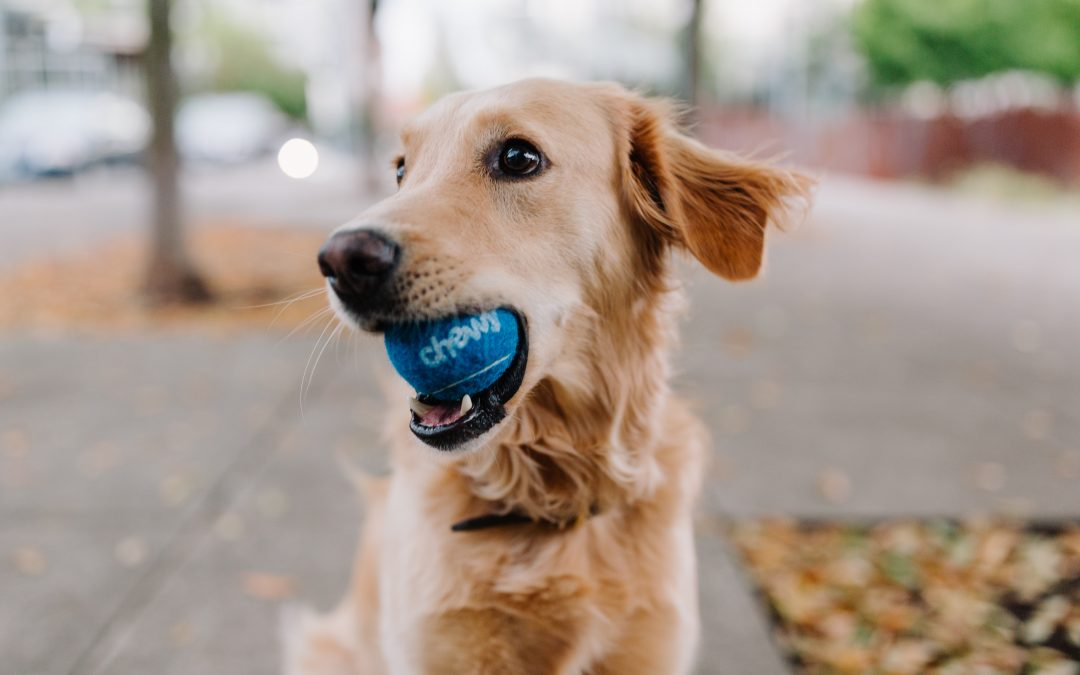 Dog Parks around the Greater Victoria Area!